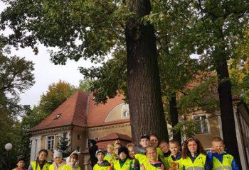 dzien_drzewa-1